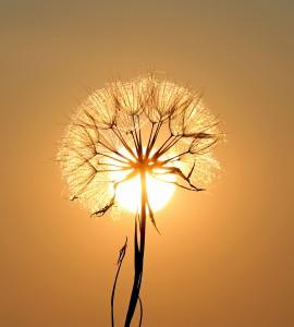 Vitamin D, Sonne, Blume